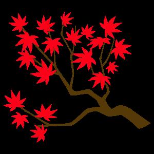 カエデの枝3