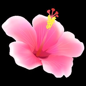 南国 花 植物イラスト Flode Illustration フロデイラスト