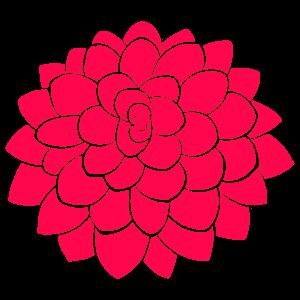 ダリアの画像 p1_13