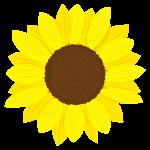 黄色の花びらが鮮…