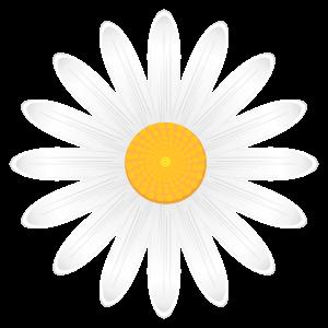 カモミールの画像 p1_25