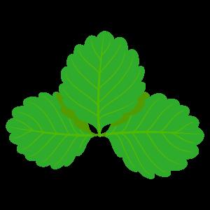 葉っぱのイラスト素材156 花 植物イラスト Flode Illustration フロデイラスト