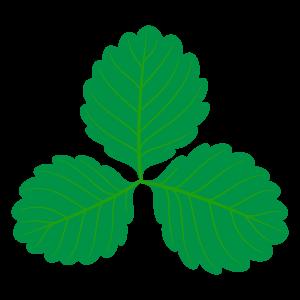 葉っぱのイラスト素材157 花 植物イラスト Flode Illustration フロデイラスト