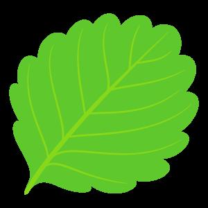 葉っぱのイラスト素材158 花 植物イラスト Flode Illustration フロデイラスト