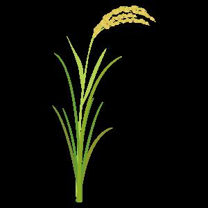 稲のイラスト1 | 花、植物イラス...