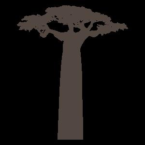 バオバブの画像 p1_36
