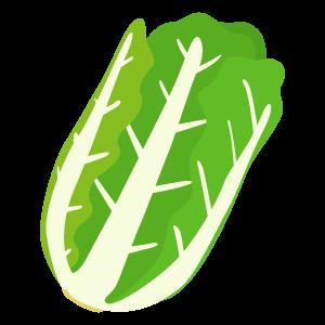 白菜の無料素材2 | 花、植物イラスト Flode illustration (フロデ ...